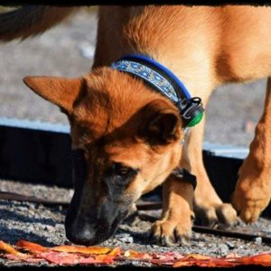 "Dog-Caching ""Einführungs-Kurs"""