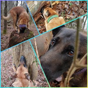 Dog-Caching Grundkurs SAMSTAG 14.03.2020